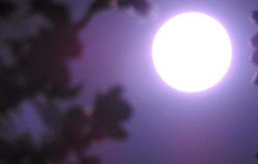 周来友エッセイ「月はどっちに出ている」